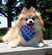 Small Pet Bandana (Pack of 10) image 2
