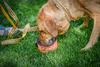 AHA Pet Bowl image 1